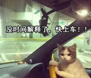 【开发者日志】青掌秋霜守南宫 寿御龙蛇镇西阁