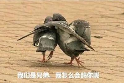 大家好鸭(剧透向)